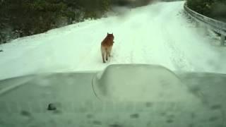 この日は北天狼は15キロ以上走りました(*^^*) 牡はスタミナ抜群ですよ ...