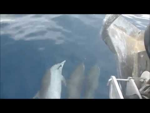 Whales & Wild Dolphins in Dominica