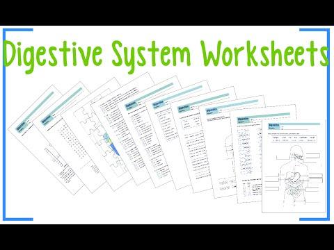 Digestive System Worksheets - YouTube