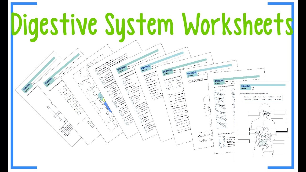 Free Worksheet Digestive System Worksheets digestive system worksheets youtube worksheets