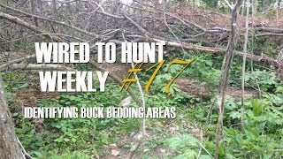 Wired To Hunt Weekly #17: Identifying Buck Bedding Areas