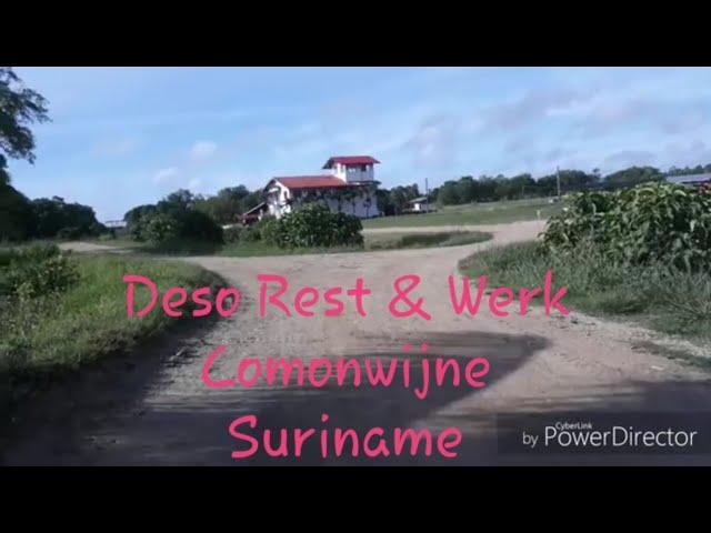 Nonton ternak sapi neng Rest & Werk Commenwijne Suriname