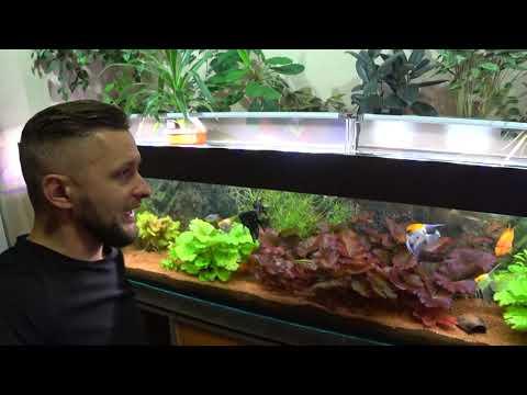 Меняю прожектора на светильник RST tech в трёхметровом аквариуме