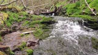 In the Woods, Rolling Stream, Green Moss. Thumbnail