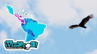 Breves: Aves migratorias en Veracruz