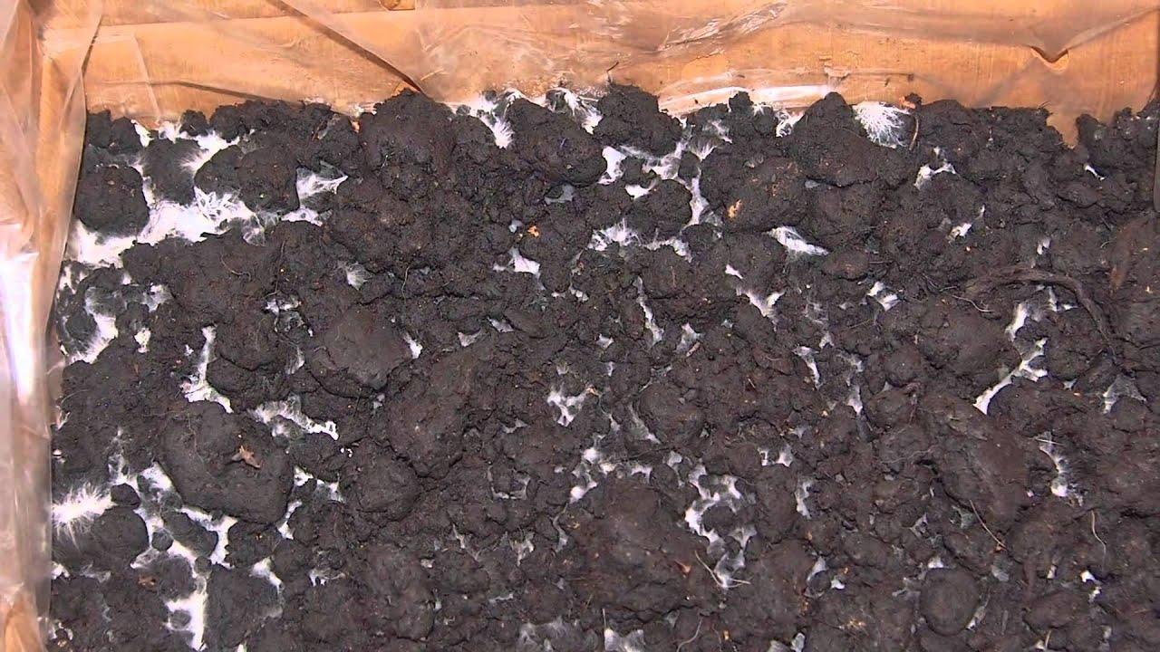 chris tas bio champignons selber z chten pilzzuchtset youtube. Black Bedroom Furniture Sets. Home Design Ideas