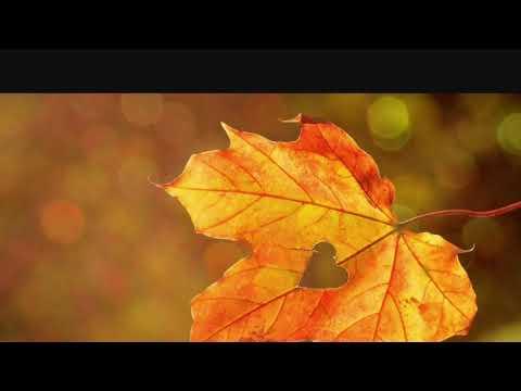 Gretchen Wilson & Merle Haggard - Politically Uncorrect