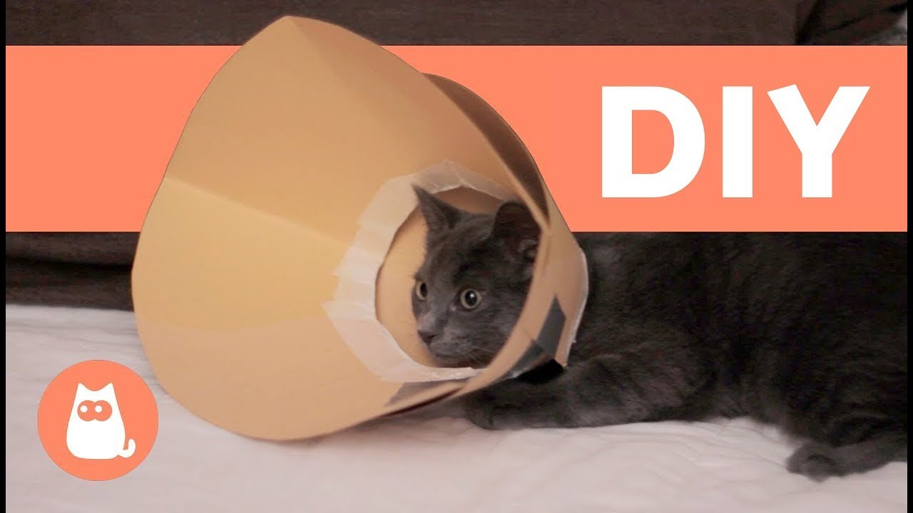 How To Make An Elizabethan Collar For Your Pet