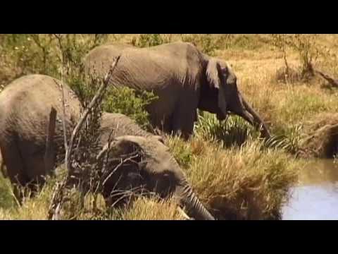 Massai Mara Vacation Travel Video Guide