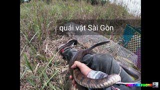 king cobra/ thủy quái Sài Gòn toàn bộ bị thu phục