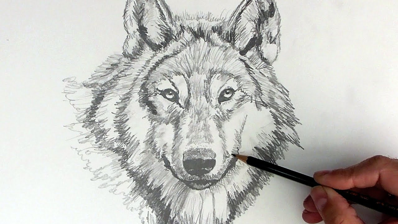 How to Draw a Realistic Wolf with Pencil Step by Step ...