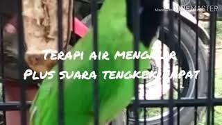 Download Mp3 Tengkek Rapat Plus Suara Air Mengalir Terapi