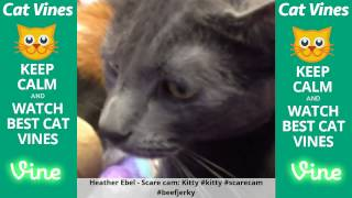 Funniest Cat Vines #46 - Updated August 12th, 2015