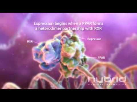 PPARs & Genetic