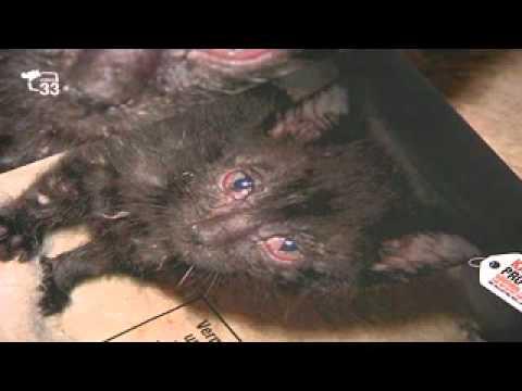 Castrazione animali in AA