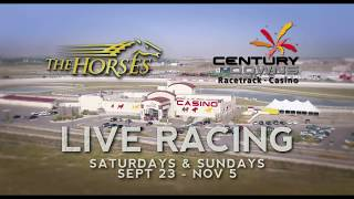 Thoroughbred racing at Century Downs
