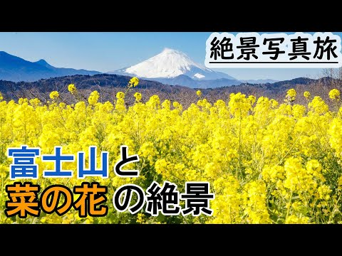【絶景写真#16】日本のおすすめ絶景スポット 神奈川の吾妻山公園で、富士山と菜の花の写真を撮る。vlog japan,Mt. Fuji