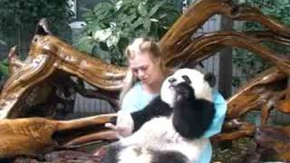 Holding Pandas in China