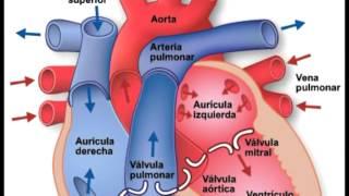 Sangre oxigenada de pasos flujo de