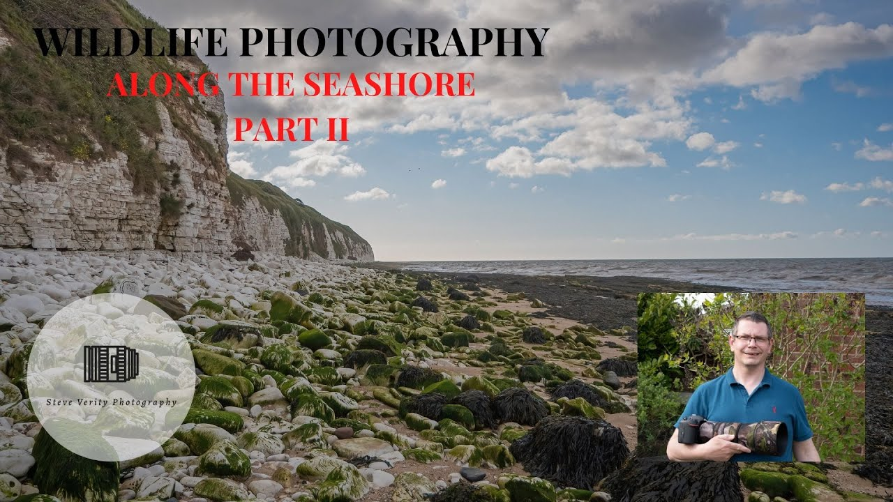 WILDLIFE PHOTOGRAPHY ON THE SEASHORE PART 2