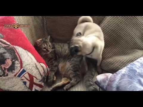 Funny Pug Lover