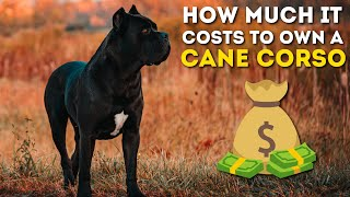How Much It Costs To Own a Cane Corso