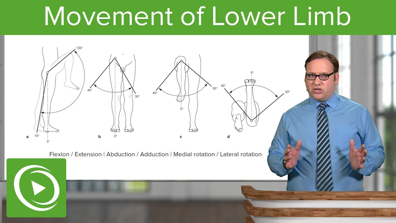 Lower Limb: Movements of the Hip, Knee and Ankle Joint – Anatomy | Lecturio