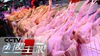 《消费主张》 20191225 节前市场调查:鸡肉价格下降了| CCTV财经