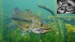 Kiwanis lake-Tempe-Fishing Arizona