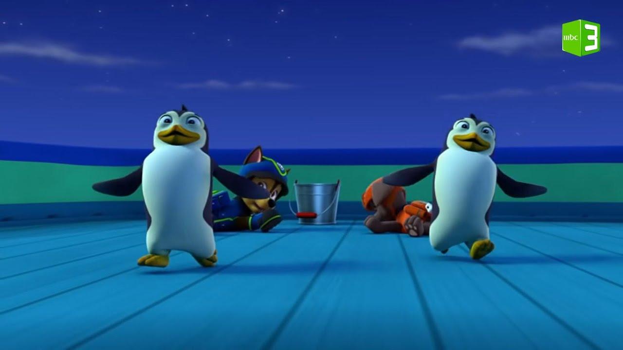 ريدر وزوما يساعدان البطاريق.. شاهد الفيديو