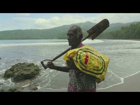 Solomon Islands: The wood for the trees