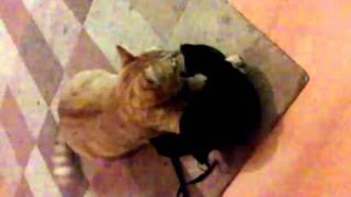 Cat hiding In Bra(, 2010-10-16T00:53:26.000Z)