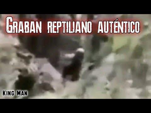 Reptiliano muy grande captado en la selva, otros dicen que es un Yeti o Troll