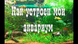 Как устроен мой аквариум. Обзор моего аквариума.