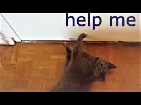 spayed-cat-wants-out-into-hall