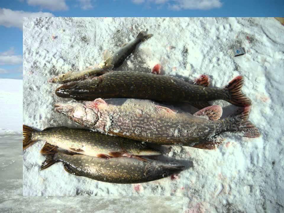 бесплатная рыбалка московское море