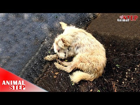 Poor Dog Hopes to Get Heal Soon After Rescued from the Street