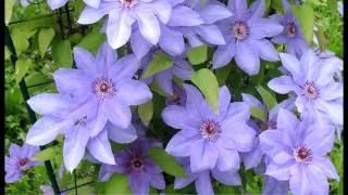 Цветущие растения. Хвойные деревья. Живая изгородь. Вьющиеся растения.(http://petrkazakov.ru Цветущий сад!, 2016-06-22T10:00:14.000Z)