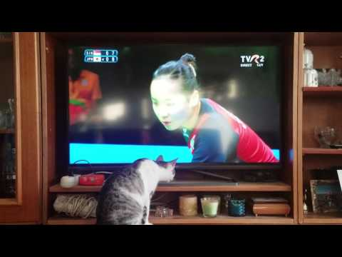 Cat watching table tennis...Rio Olympics