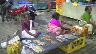 Fish Market Cherai Beach Kerala | Street Market Selling Fresh Fish