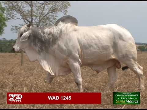 LOTE 08 - WAD 1245