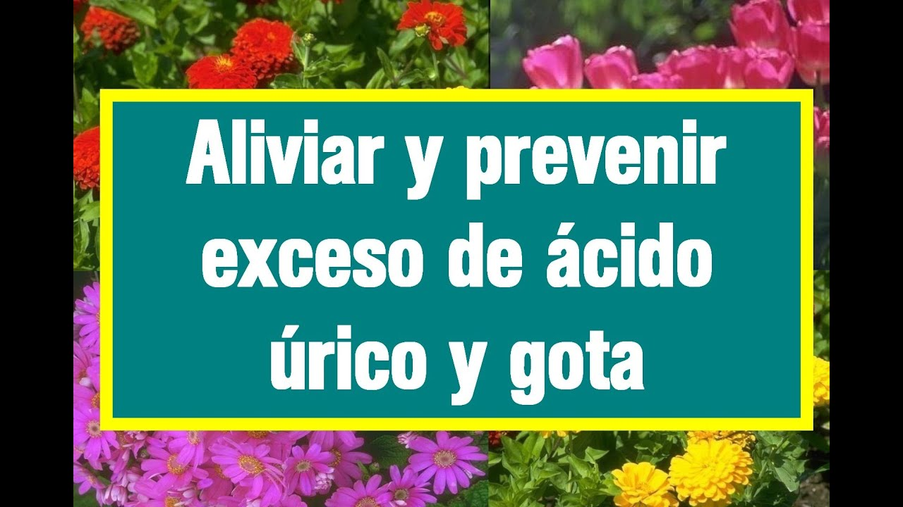 hierbas para quitar la gota dieta sana para el acido urico