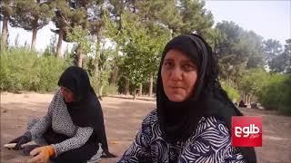 شماری از زنان در هرات با روی آوردن به کارگری بخشی از مصارف خانوادههای شان را تأمین میکنند
