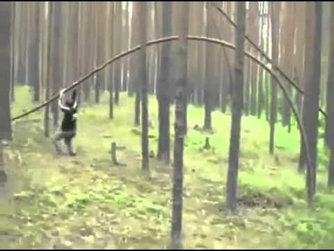 Tree ride fail.