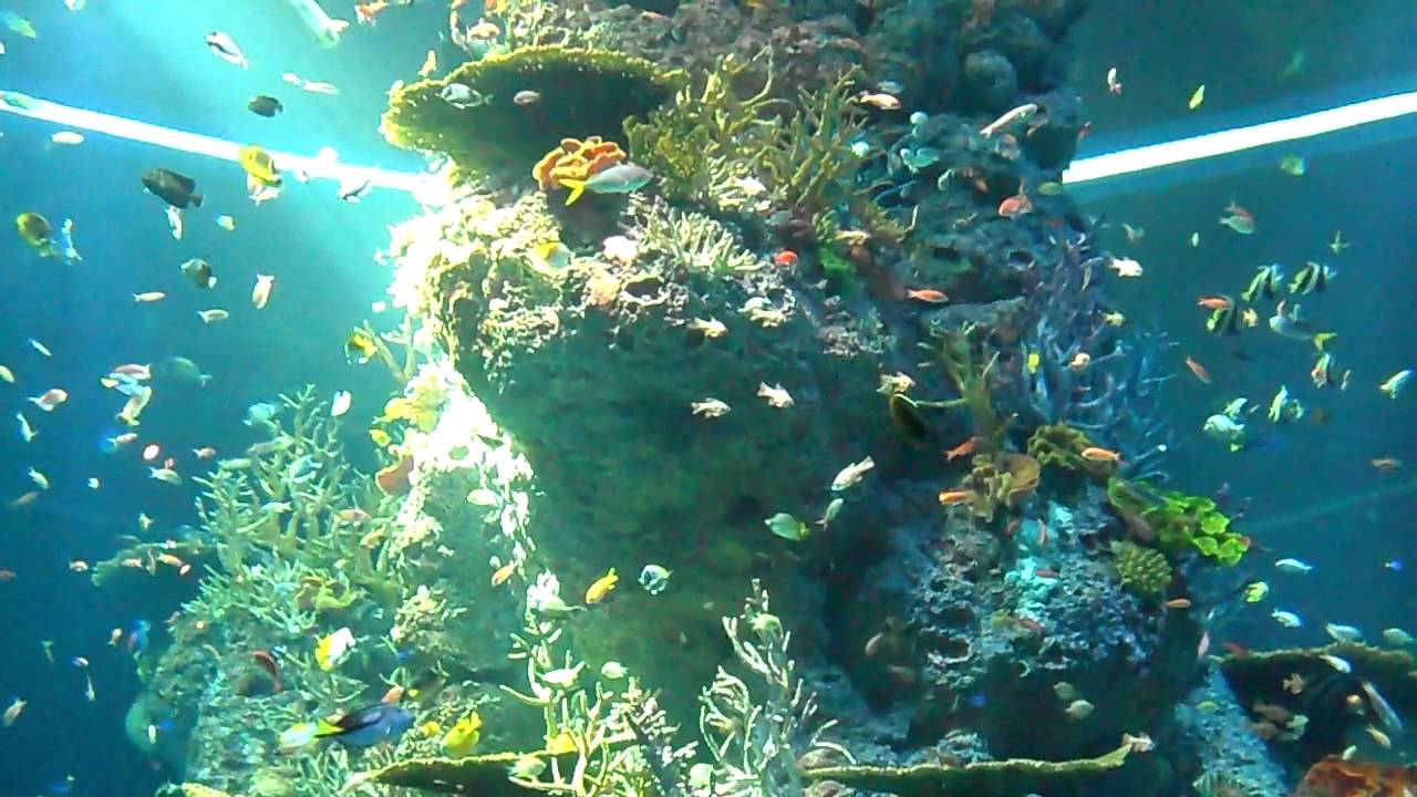 Aquarium fish tank singapore - Sea Aquarium Singapore Tall Vertical Fish Tank 2bearbear Com
