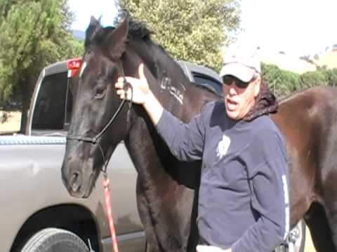 how to teach your horse to bow no ropes