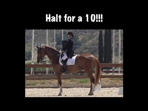 Download Halt for a 10