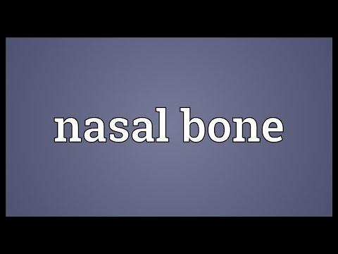 Nasal bone Meaning