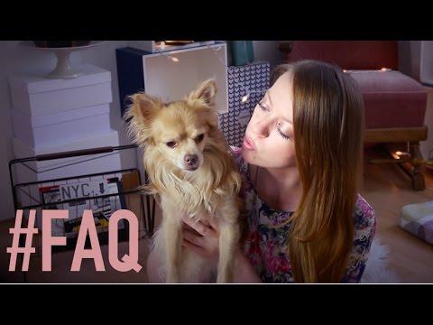faq jimmyfirefox studieren laufen wohnen mit hund youtube. Black Bedroom Furniture Sets. Home Design Ideas