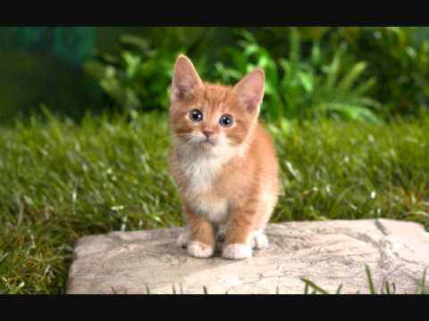 Very cute cat and dog pics youtube very cute cat and dog pics voltagebd Gallery